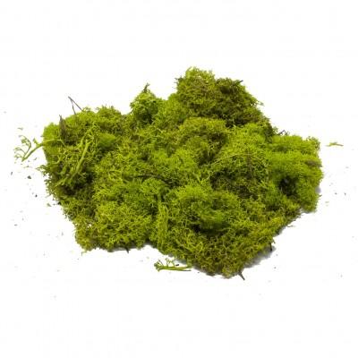 Muschio Lichene Verde per Presepe in Busta da 100 Gr - 86598