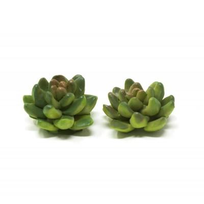Piante Grasse Set da 2 Pezzi Miniatura per Presepe 3x3x1,5 Cm